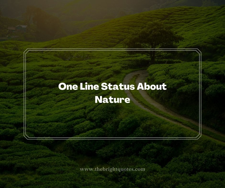 One Line Status About Nature